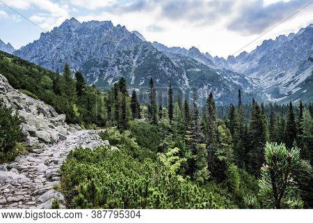 Footpath In Coniferous Forest, Mengusovska Valley, High Tatras Mountains, Slovak Republic. Hiking Th