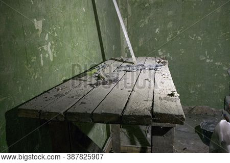 Wooden Trestles In A Room Under Renovation, Indoor Shot