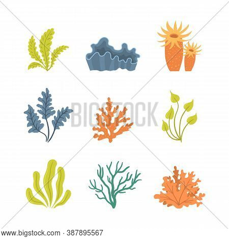 Collection Of Seaweeds, Underwater Sea Plants, Shells. Vector Illustration Of Seaweeds, Planting, Ma