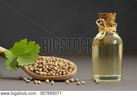 Glass Bottle Of Coriander Essential Oil With Fresh Cilantro Leaf On Rustic Table, Aromatherapy Massa