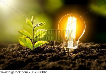 Glowing Led Light Bulb. Ecological Friendly And Sustainable Environment