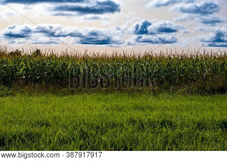 A Cornfield With Tall Stalks Of Corn Is Seen From The Side, With Long Grass In The Foreground. A Sky