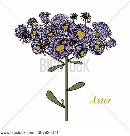 Blue Aster On White Ink Hand Drawn Design Element Stock Vector Illustration For Web, For Print