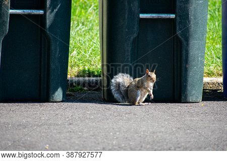 A Squirrel Looking At The Camera Standing On A Blacktop Driveway In Front Of A Trash Can