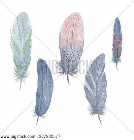 Colorful Fancy Bird Feathers Set Watercolor Illustration Boho Style Decorative Wings For Creative Ru