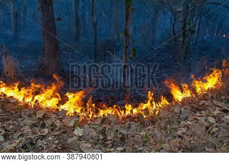 Wildfire On Mountain In Thailand Due To Human