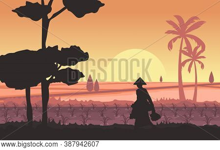 Morning Asian Farmer In Rice Field Paddy Plantation Agriculture Illustration