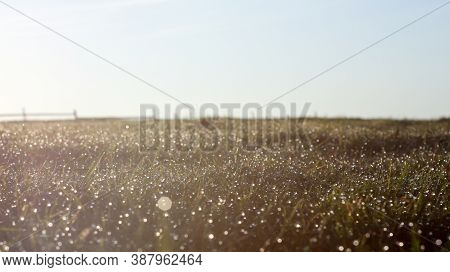 Dewdrops On The Grass In The Morning - Dewdrops Hit By Sun