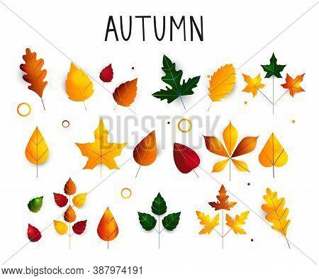 Colorful Set Of Autumn Leaves. Oak, Maple, Birch Leaf. Deciduous Trees. Autumn Leaves For Seasonal H