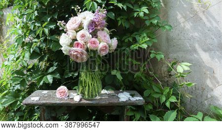 Romantic Bouquet Of Delicate Pink English Roses On The Background Of A Wall Entwined With A Virginia