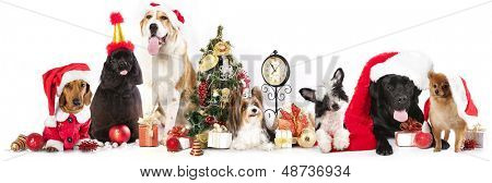 group of dogs wearing a Santa hat
