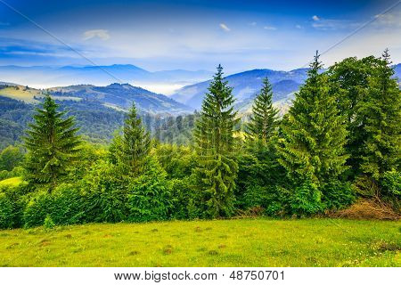 Row Of Trees In Mountains