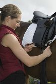 Side view of a young woman tightening saddle on horse outdoors poster