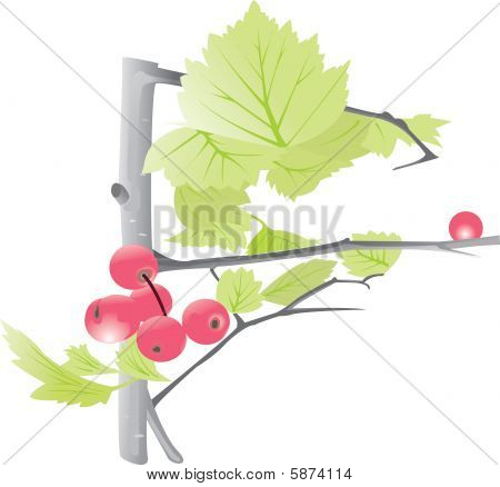 Berries on a tree with leaves