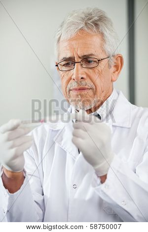 Mature male technician analyzing microtiter plate in laboratory poster