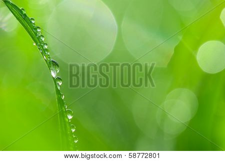 Lush green grass with dew