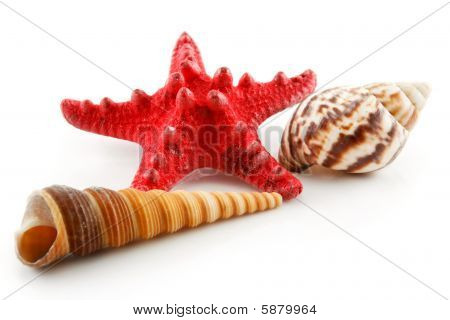 Colored Seashells (starfish And Scallop) Isolated On White