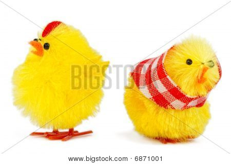 Mommy And Daddy Chick Dispute