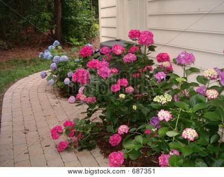 Mix Hydrangia Garden 2
