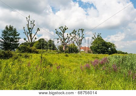 Colorful Landscape With Oddly Shaped Trees