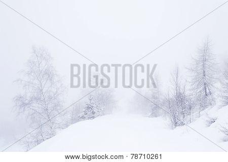 Dreamy Winter Environment