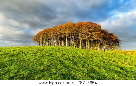 Small Copse Of Trees On A Hill