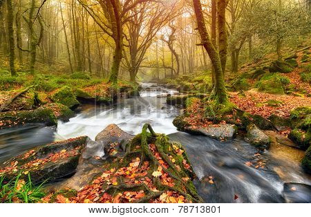 Autumn Forest Waterfalls
