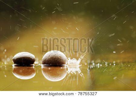 Marco Shot Of Mushroom In Raining Day