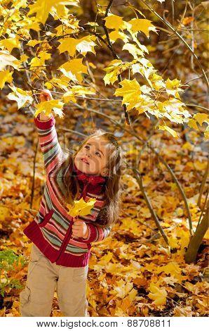 Little girl plucks leaves in autumn park