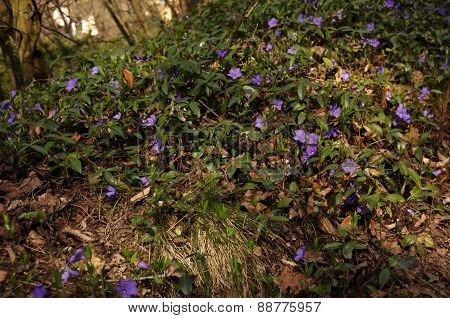 Blue forest plant with many flowers