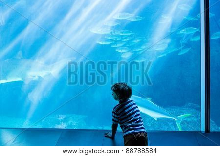 Young man looking at fish in a giant tank at the aquarium