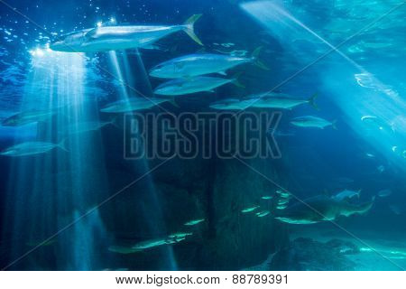 Fish swimming with shark in darkest water at the aquarium