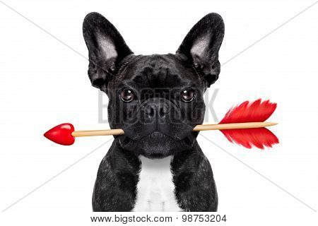 Valentines Arrow Dog