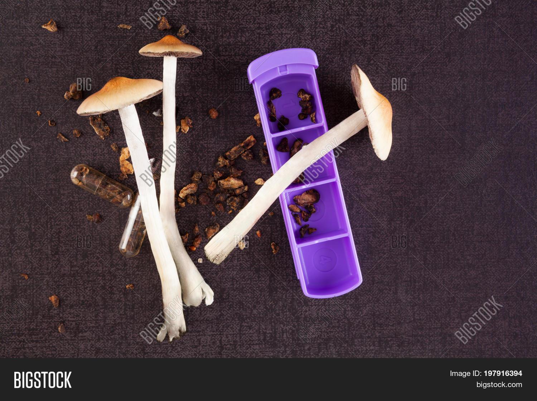 Fresh Dried Psilocybin Image & Photo (Free Trial)   Bigstock