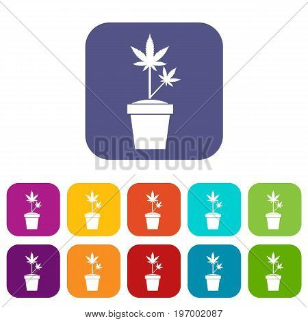 Hemp in pot icons set vector illustration in flat style in colors red, blue, green, and other