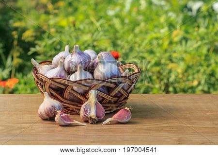 Ripe Garlic In A Wicker Basket On Wooden Board With Natural Green Background