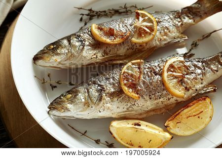 Delicious baked sea bass fish in white plate