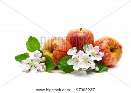 Apples and flowers isolated on white background. Horizontal photo.
