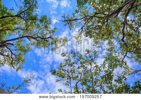Top part of tree at forest with sun light and blue sky.