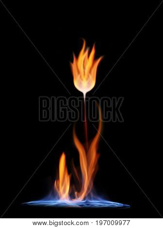 Flower of flame on black background. Wildfire concept