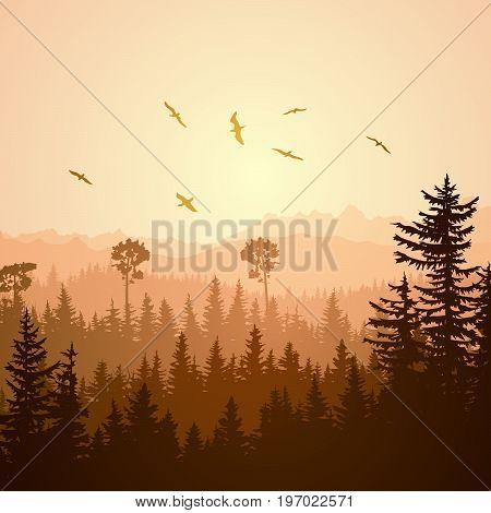 Square illustration foggy coniferous forest hills with flock of birds at sunset.
