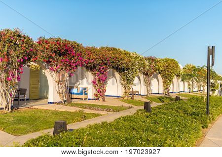 Dahab, Egypt - January 10, 2015 - Egypt tourist resort at Red Sea. Hotel territory with green trees in desert