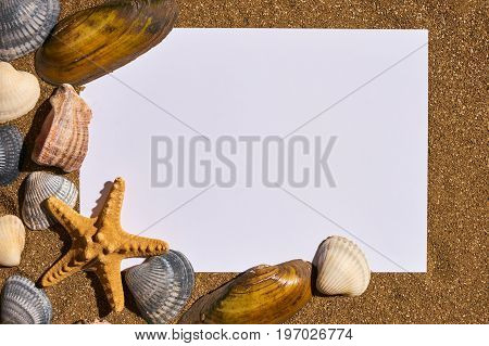 Summer holiday beach concept with shells seastars and an blank postcard with copy space