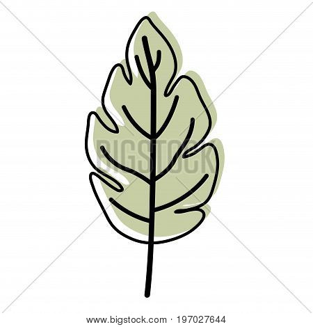 watercolor silhouette of lobed leaf plant vector illustration