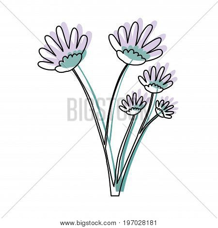 watercolor silhouette of hand drawing lilac daisy flower bouquet with several ramifications vector illustration