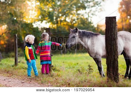 Family on a farm in autumn. Kids feed a horse. Outdoor fun children. Toddler boy and girl playing with pets. Child feeding animal on a ranch on cold fall day.