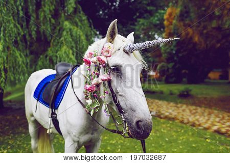 White horse dressed as a unicorn with the horn. Ideas for photoshoot. Wedding. Party. Outdoor