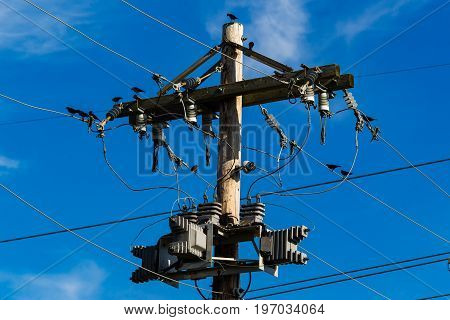a few birds perched on and around a utility pole