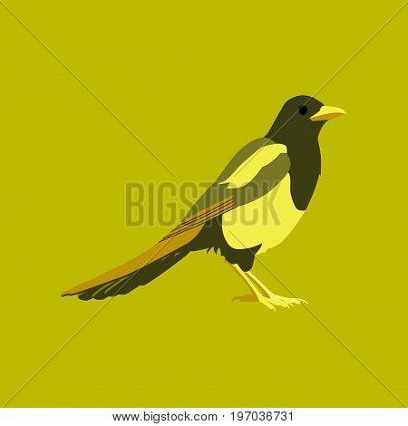 Vector illustration in flat style magpie bird