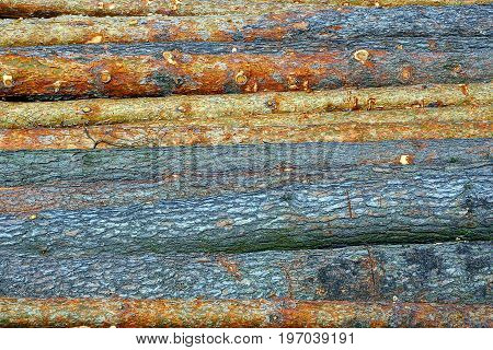 Logs of sawn pine trees on a sunny day